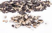 foto of semen  - Bunch of sunflower seeds close up - JPG