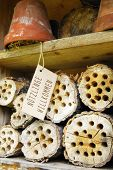 picture of creatures  - insect hotel - JPG