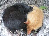 foto of homeless  - Two homeless cats warm each other in the cold autumn - JPG