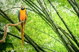 stock photo of green-winged macaw  - Macaw parrot in a green rain forest - JPG