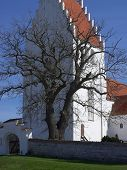 Árvore e Igreja