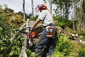 lumberjack, forest worker in action, sharpness on main-parts such as chainsaw, helmet and sidebag.