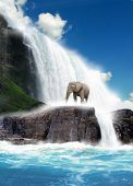 Elephant At Waterfall