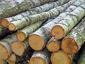Pilha de Logs de vidoeiro branco, detalhes do ambiente