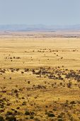 foto of open grazing area  - landscape of a dry area in south africa - JPG
