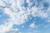 Group Seagulls Are Flying On The Cloud Blue Sky poster