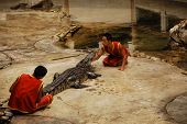 Alligator Show In Thailand