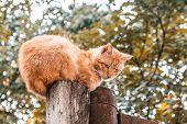 Sad Ginger Cat Sitting On Wooden Pole On Blurred Background poster