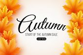 Autumn Sale. Web Banner With Lettering. Seasonal Poster With Autumn Leaves. Maple Leaf. Start Of A S poster