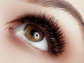 Eye Makeup . Closeup Macro Shot Of Fashion Eyes Visage. Close Up Of Woman Eye With Beautiful Brown W poster