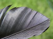 Feather-Bed Of Bird