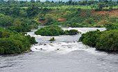 River Nile Scenery Near Jinja