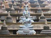 Buddha rows
