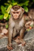 Portrait Of A Wild Monkey. A Selfie Of A Monkey. Macaque Looks At The Camera. Wild Primates. Wild An poster