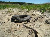 Snake on dry land