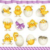 Easter Eggs Chicks