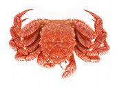 pic of crustations  - Image set of Crab in isolated white background - JPG
