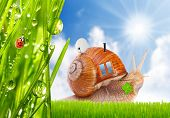 foto of campervan  - The snail with his mobil home on the trip - JPG