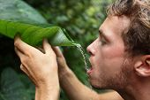 Survival - man drinking rain water from leaf in rainforest jungle.
