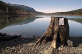 Tree Stump No Parking Sign Rattlesnake Lake North Cascade Mountains