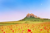 Spis Castle And Poppy Field