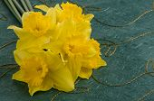 pic of jonquils  - Closeup detail of yellow jonquil flowers on green background - JPG