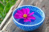 Floating Flower With Violet Petal