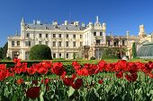 Tulips in front of Lednice Castle
