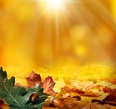 stock photo of acorn  - autumn background - JPG