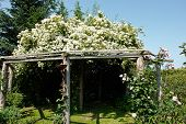pic of pergola  - Wooden pergola gazebo in a beautiful blooming garden full of flowers and green plants - JPG
