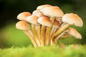 Macro photo of forest poison mushrooms