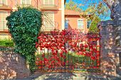 Red vine covers metal gate as part of brick fence at the entrance to typical italian house in Piedmo