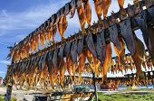 Dried Fish In Rodebay Settlement , Greenland