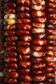 Close up of corncob