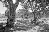 Australian Outback Oasis