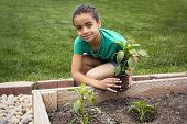 African American Girl Planting a new Plant