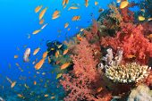 Coral reef, fish and scuba diver