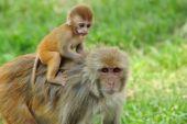 Baby monkey in Kathmandu