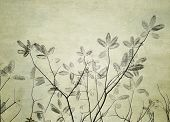leaves tree with old grunge antique paper texture
