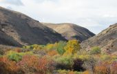 stock photo of yakima  - Fall colors along Yakima River in Yakima River Canyon on Highway 821 - JPG