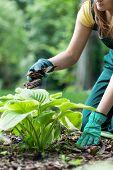 Happy Young Woman Fertilizing Plant