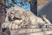 Lion sculpture on Lviv city Ukraine