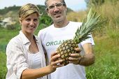Organic farming: Farmer couple showing a pineapple