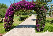 Decorative Arch Of Bougainvillea