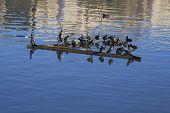 Birds Perching On A Piece Of Metal Block