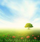 Summer, Field, Sky, Tree, Grass, Poppy