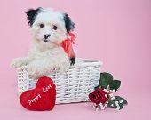 Sweet Valentine's Day Puppy
