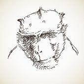 Sketch of monkey head Hand drawn vector illustration