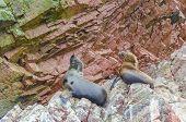 Islas Ballestas, Peru - sea lions