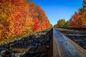 Autumn Train is Coming